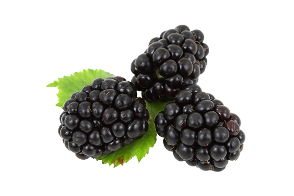 Blackberries For Sale | D & B Grant Blairgowrie